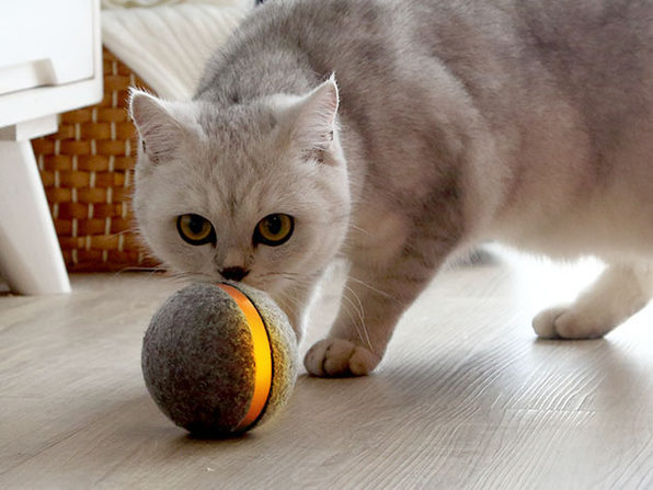 Wicked Ball: Interactive Toy for Cats