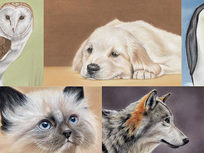 Drawing Animals Using Pastel Pencils - Product Image