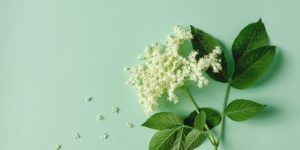 Natural Remedies for Health & Dog Training - Product Image