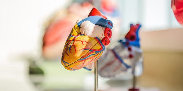Introduction to the Cardiovascular System - Product Image