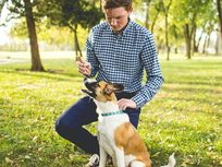 Become a Dog Trainer - Product Image