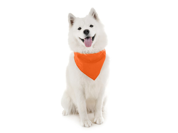 2 Pack Qraftsy Dog Cotton Bandana Scarf Triangle Bibs for Any Size Puppies, Dogs and Cats - Yellow