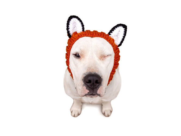 Fox Zoo Snood