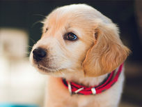 Puppies: A-Z Guide to Puppy & Dog Training - Product Image