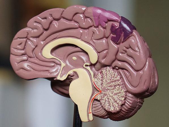 The Mastering Cognitive Biases Bundle