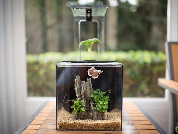 EcoQube C Premium Aquarium with UV LED Sterilizer and Aquaponic System