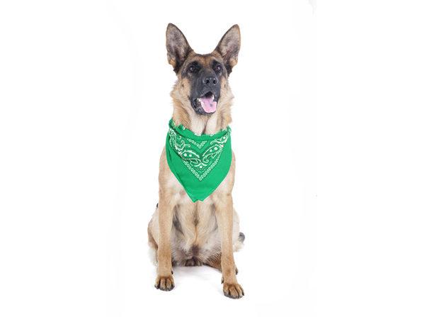 5 Pack Paisley Polyester Pets Dogs Bandana Triangle Shape  - Oversized - Blue