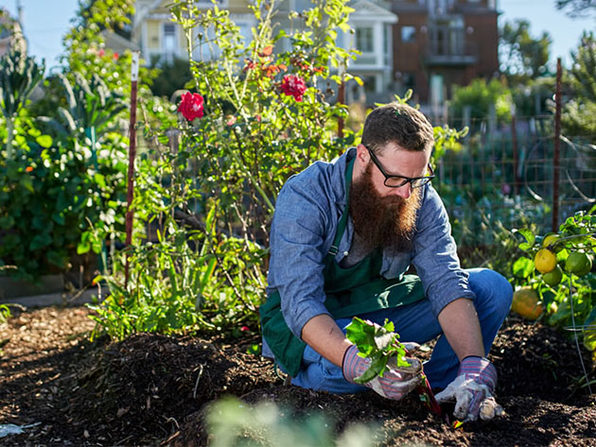 The Combined Urban & Zen Gardening Mastery Bundle