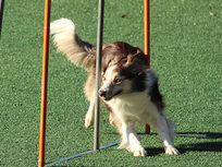 Running a Dog Training Business - Product Image