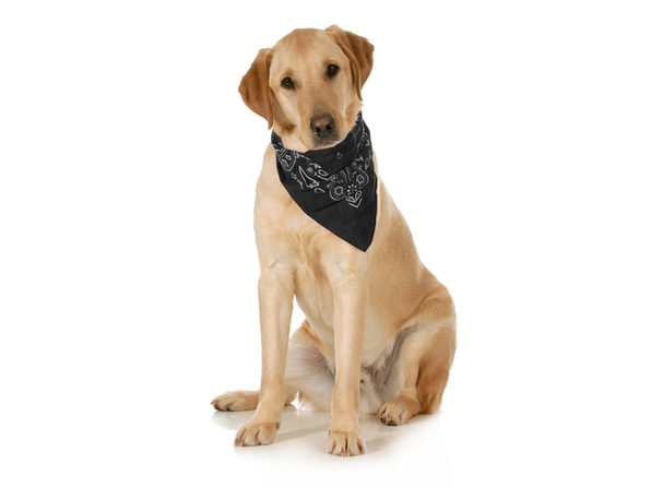 5-Pack Paisley Cotton Dog Scarf Triangle Bibs  - XL and Washable - Black