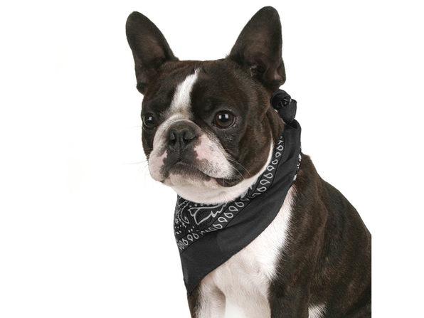 Pack of 4 Paisley Cotton Dog Bandana Triangle Shape  - One Size Fits Most - Black