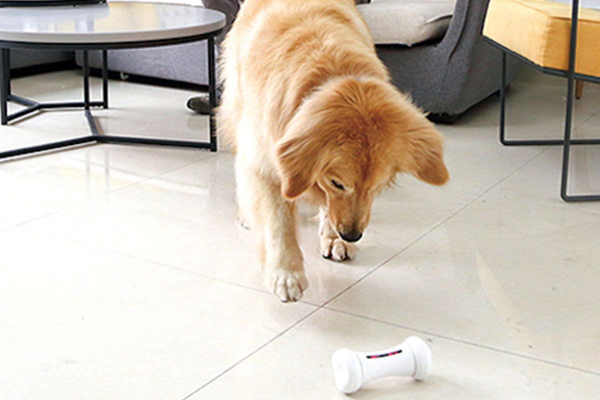 7 smart toys, tools, and accessories your four-legged friend will love