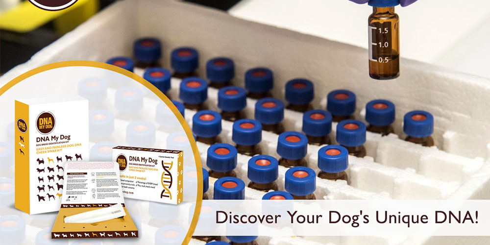 Get the DNA My Dog Breed Identification Test Plus Full Genetic Screening for $143.19 with promo code CMSAVE20