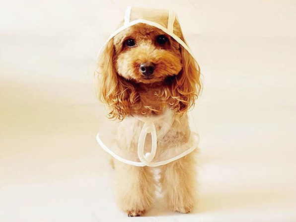 Clear Waterproof Pet Hoodie (XL)
