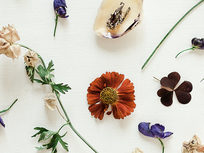 Foundation Course In Naturopathy - Product Image
