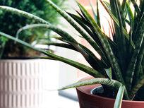 Ornamental Plants Propagation - Product Image