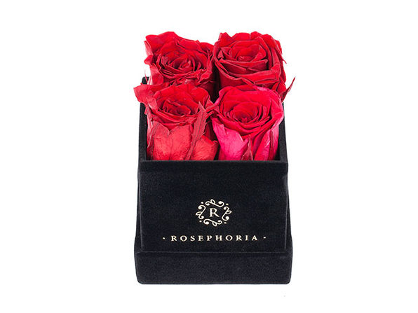 Le Petite Everlasting Roses: Box of 4